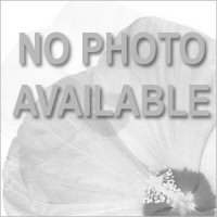 Cabaret<sup>®</sup> Red Calibrachoa
